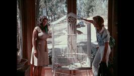 Birdcage Scene 1
